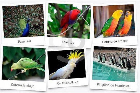 Wunderschöne Tierwelt auf Lanzarote