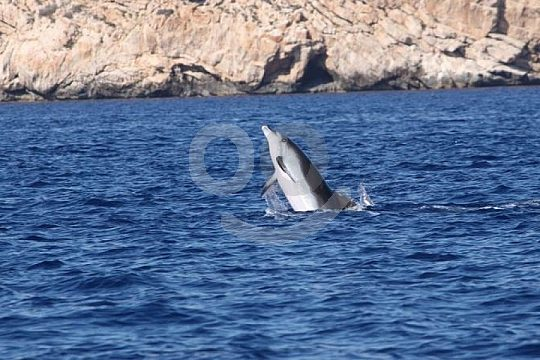 Delfine vor Cabrera