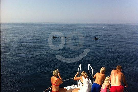 Delfinbeobachtung Gruppe Costa del Sol