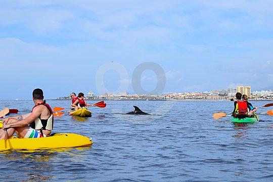 Delfine beobachten mit dem Kayak auf den Kanaren
