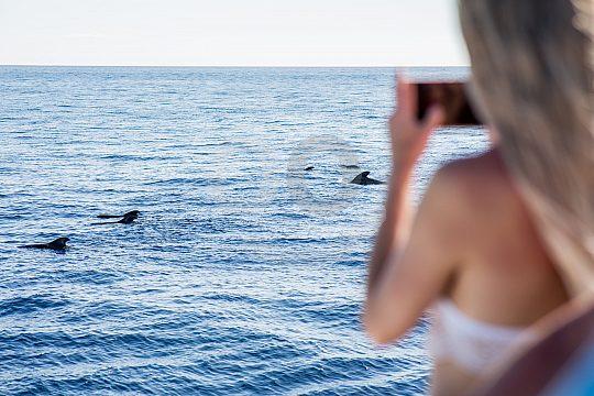 Delfine vom Glasbodenboot auf Teneriffa beobachten