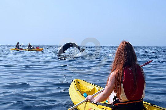 mit Delfinen schwimmen auf Teneriffa