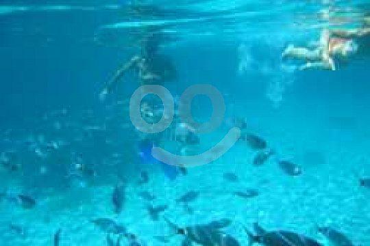 Mit den Fischen tauchen vor Formentera