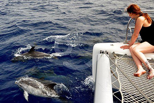 Delfine gucken Fuerteventura
