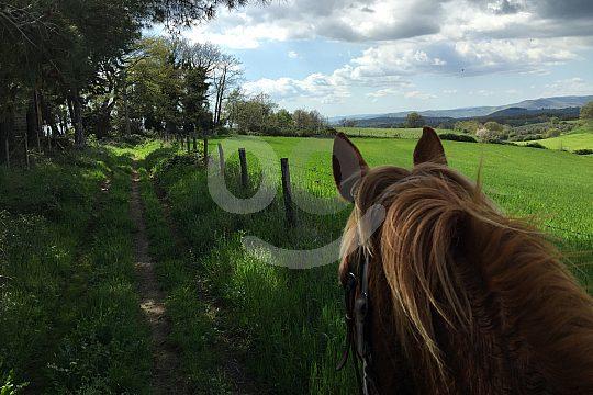 Maremma mit Pferd erkunden