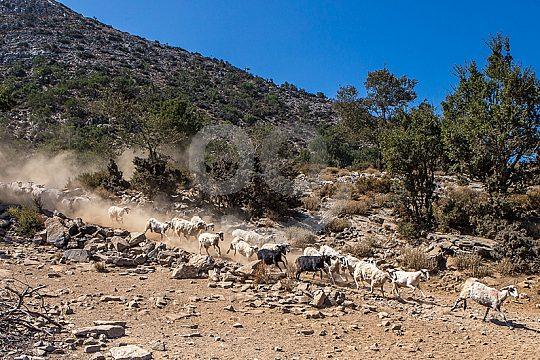 Kreta entdecken bei Jeep Safari