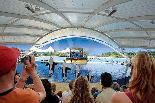 Show mit Killerwalen im Loro Park