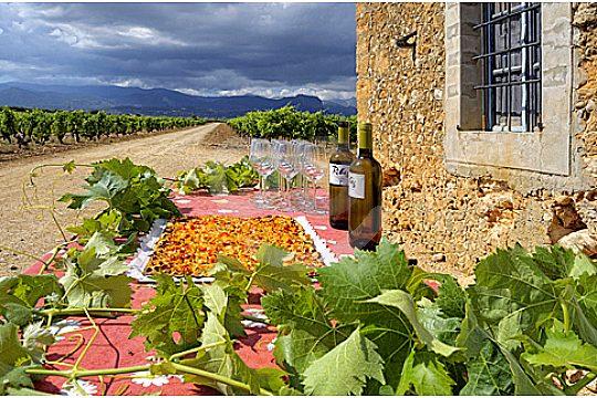 mallorca wine express weinprobe im weinfeld