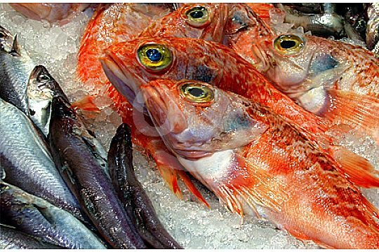 andratx-restaurant-frischer-fisch