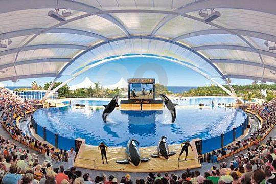 Orcas im Loro Park erleben