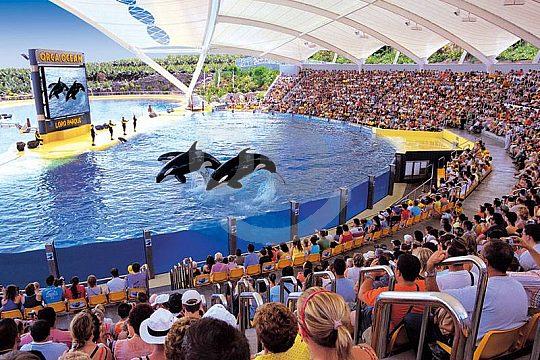 Orca-Show im Loro Parque