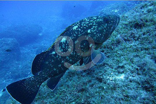 Exotische Fische und Pflanzen sehen beim Tauchen auf Mallorca
