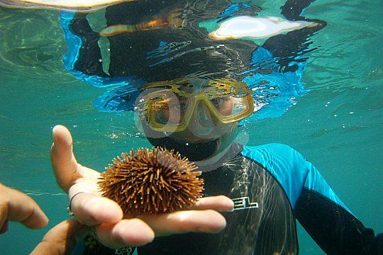 Unterwasser in Fuerteventura