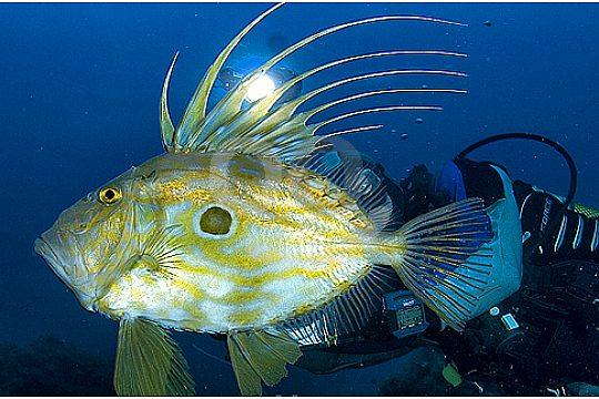 Fisch beim OWD Tauchkurs in Santa Ponsa