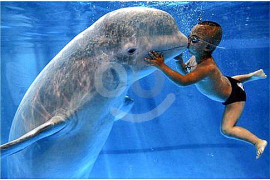schwimmen lernen mallorca junge mit seekuh im pool