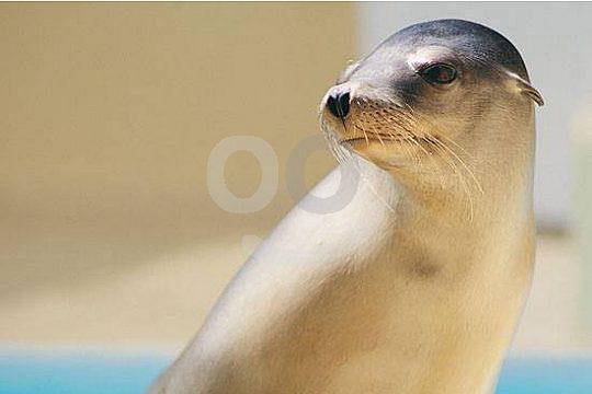 Seelöwen im Loro Park ab Gran Canaria entdecken