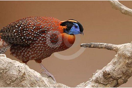 Vögel im Zoo von Lanzarote Guinante Tropical Park