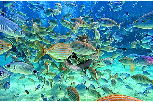 Mit Fischen Tauchen in Mallorca Palma
