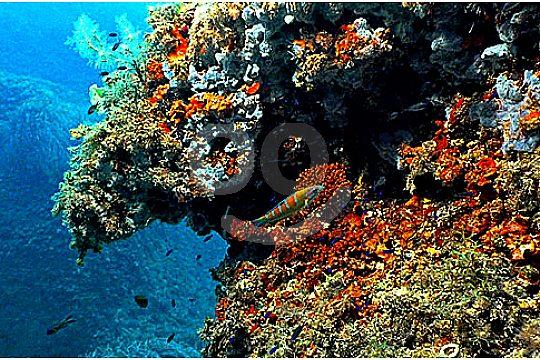 Mallorca Riff beim Tauchen