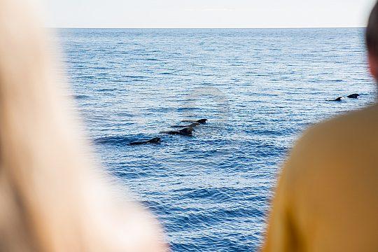 ein Delfinschwarm begleitet die Bootstour
