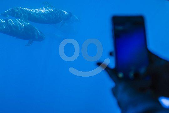 magische Momente unter Wasser festhaltem