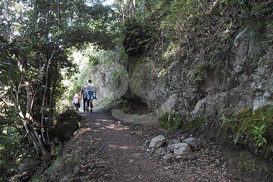 Teneriffa Lorbeerwald Wanderung
