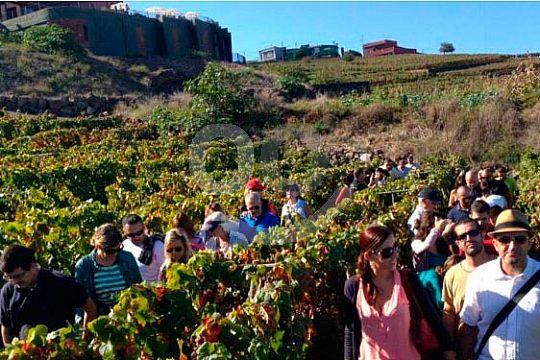 Besuch der Weinfelder auf Teneriffa
