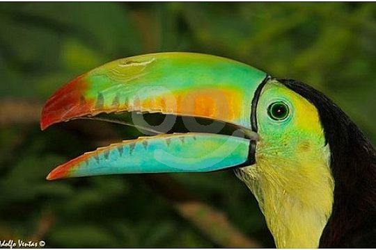 Papageien im Guinante Tropical Park auf Lanzarote