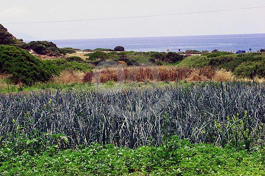 mediterranes Panorama Rhodos