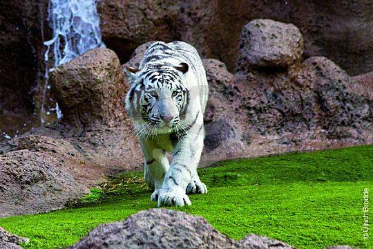 bedrohte Tiere live erleben im Loro Parque