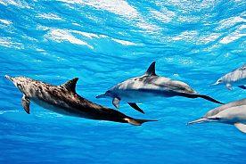 Delfine beobachten auf der Bootsfahrt