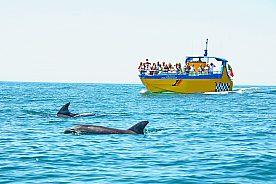 Gruppe im Boot entdeckt Delfine