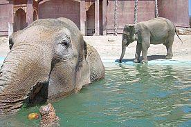 Elefanten im Terra Natura Benidorm