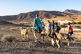 Wandern mit Ziegen auf Fuertevenutra