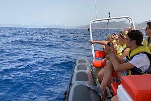 Delfine auf Fuerteventura beobachten im Schlauchboot