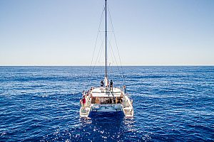 Delfintour Madeira mit Katamaran