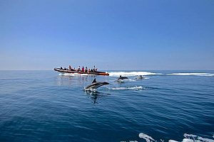 Delfin Safari an der Algarve