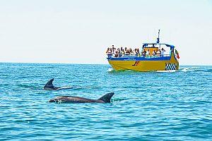 Albufeira Bootstour: Delfinbeobachtung und Höhlentour entlang der Algarve