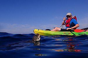 Schildkröten schwimmen neben Kayak auf Teneriffa