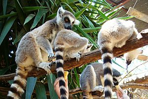 Monkey Park Affenpark Teneriffa