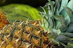 Obst- und Gemüse Lieferservice für Haus oder Hotel auf Mallorca