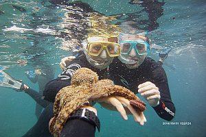 Oktopus beim Schnorcheln in Fuerteventura