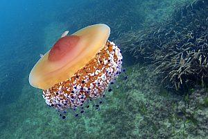 In Tabarca Schnorcheln: die Schnorchel-Tour ab Santa Pola zum Meeresschutzgebiet