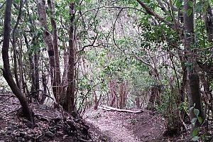 Wanderung durch den Lorbeerwald auf Teneriffa