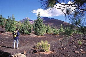 Vulkan Wanderung Teneriffa