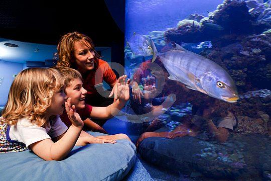 niños en Palma Aquarium