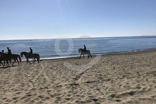 Malaga Pferdesport