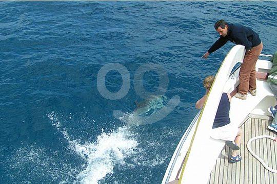 delfines al lado del catamarán de visión submarina