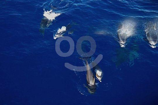 Delfinbeobachtung Katamaran Cala Ratjada