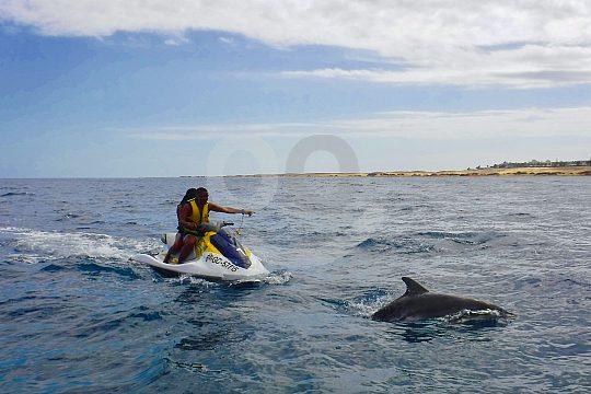 Safari en Jetski Fuerteventura a los Delfines